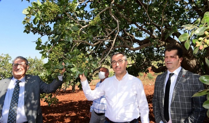 Başkan Güngör: Baklavanın fıstığı Pazarcık'tan
