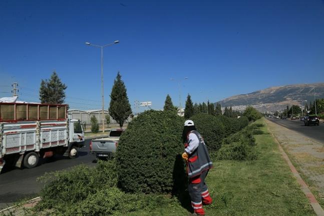 Büyükşehir'den yeşil alan bakım çalışmaları
