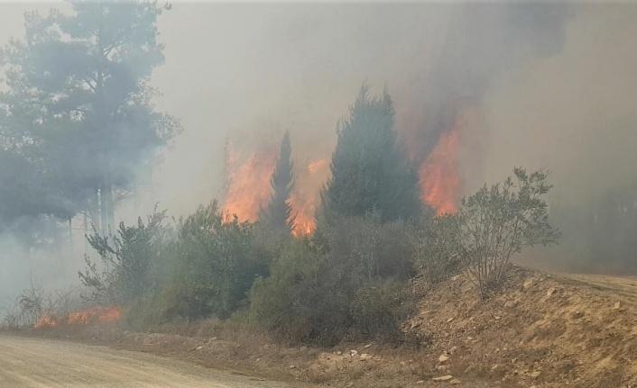 Kahramanmaraş ve Hatay'daki orman yangınlarına müdahale sürüyor