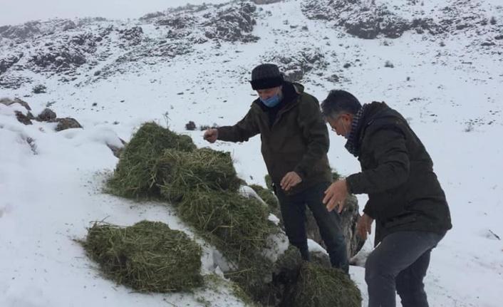 Kahramanmaraş'ta yaban keçileri için yonca bırakıldı