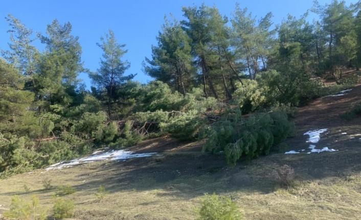 Kahramanmaraş'ta ormanlık alanlarda hasar büyük