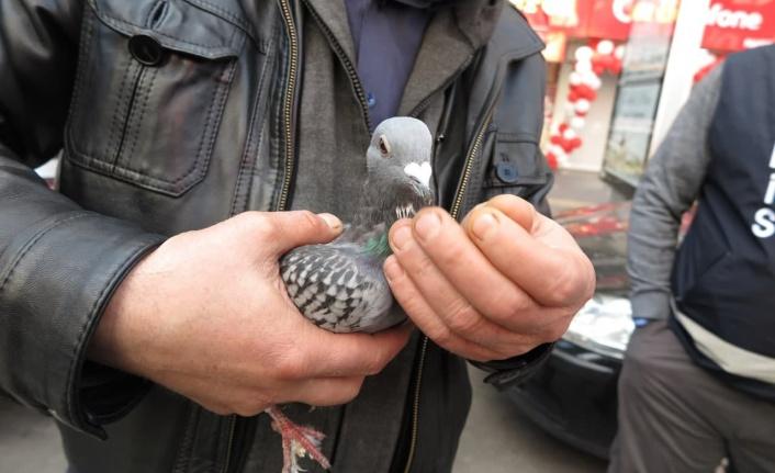 Yaralı güvercine önce esnaf sonra polis sahip çıktı