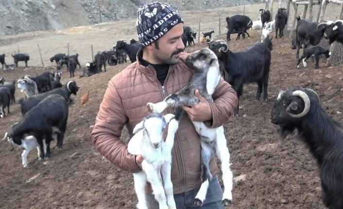 Kahramanmaraş'ta küçükbaş hayvan sayısı 1 milyon 300 bine ulaştı