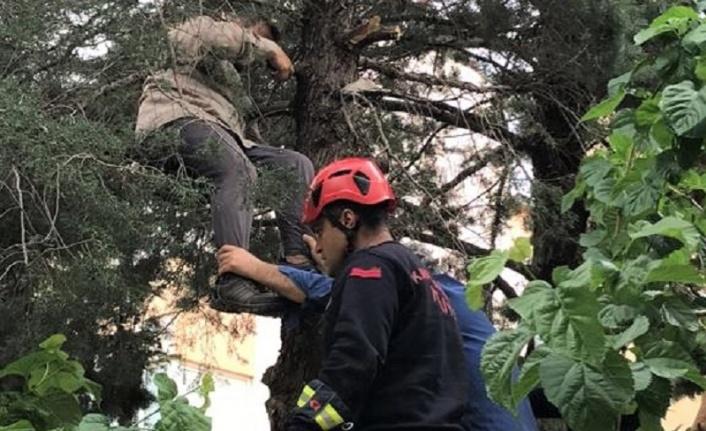 Budama Yapmak İçin Çıktığı Ağaçta Fenalaştı