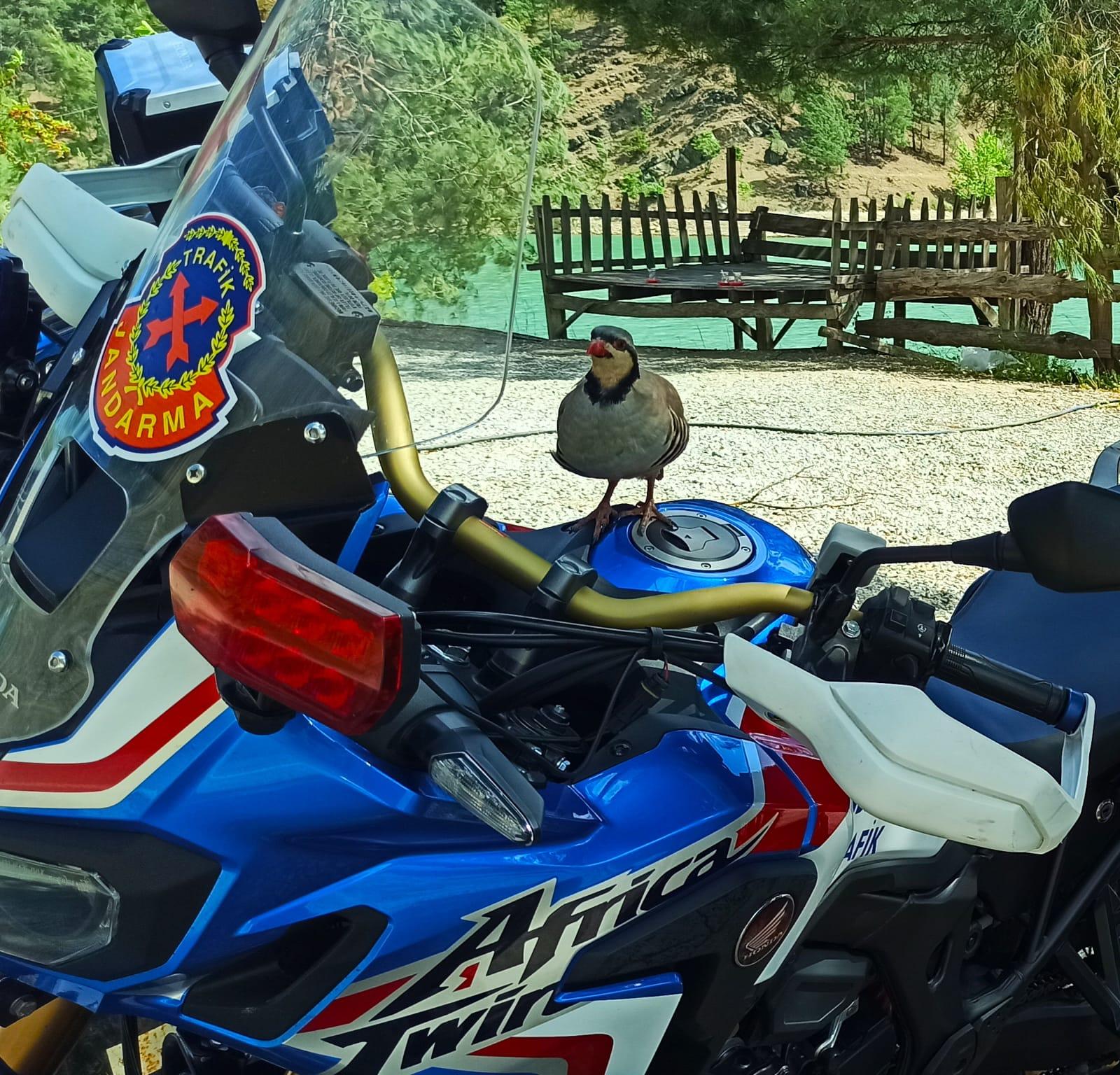 Günün fotoğrafı Jandarma'dan