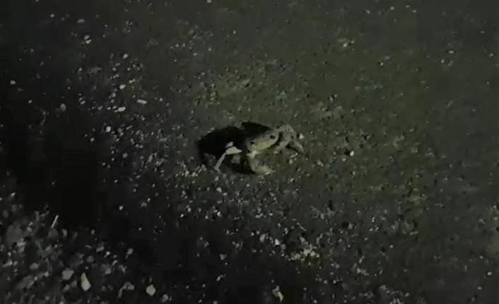 Kahramanmaraş'ta taş şekliyle kamufle olan yengeç şaşırttı
