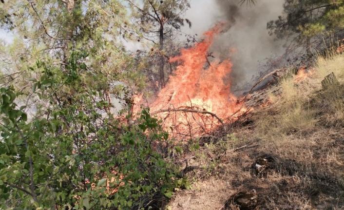 Kahramanmaraş'ta orman yangını söndürüldü