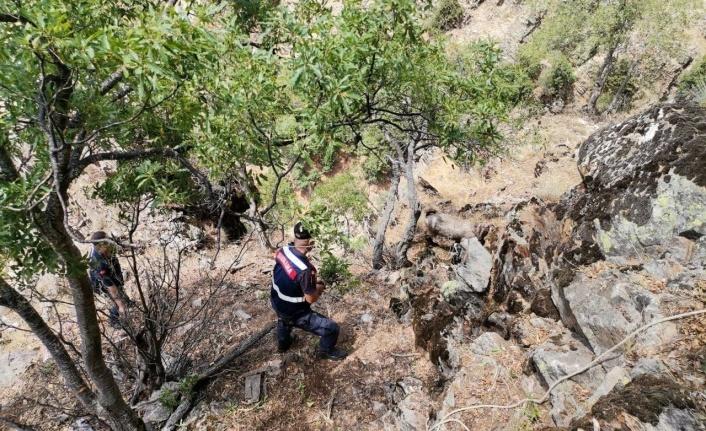 Kayalıklarda mahsur kalan keçileri jandarma ekipleri kurtardı