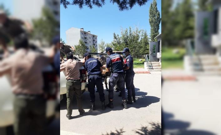 Yaralı yaban keçisine Jandarma ekipleri sahip çıktı