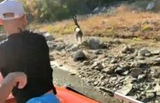 Yaban keçisini baraj gölünde boğulmaktan dalgıç ekipleri kurtardı