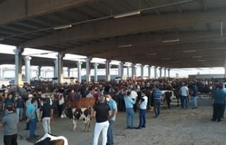 Canlı Hayvan Borsası Kurban Bayramı'na hazır