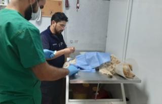 Elbistan'da yaralı köpeğe sahip çıktılar