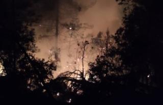 Kahramanmaraş'ta orman yangını kontrol altına...