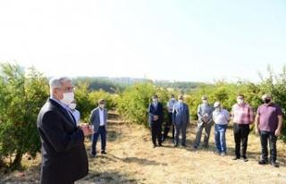 KSÜ'de Nar Bahçesinde Nar Günü Etkinliği Düzenlendi