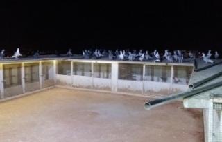 Güvercinleri için evlerinin çatısını piste çevirdiler
