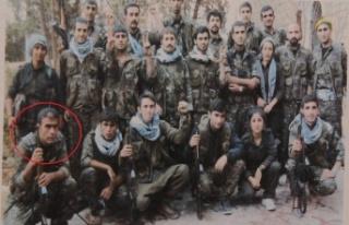 Tutuklanan HDP ilçe başkanı PKK'nın dağ kadrosundan...