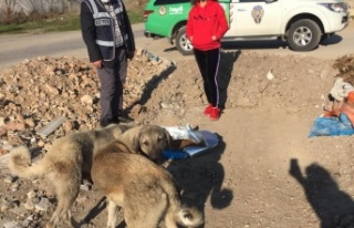 Doğa polislerinden sokak hayvanlarına yılbaşı...