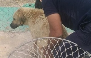 Sulama Kanalına Düşen Köpeği Son Anda Kurtardılar