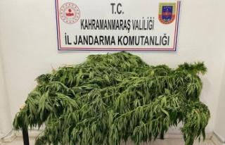 Kahramanmaraş'ta jandarma uyuşturucuya geçit...