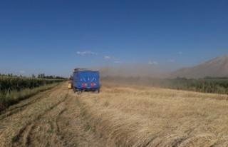 10 bin yıllık ata mirası siyez buğdayının hasadı...