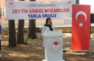 Andırın'da Zeytin Sineği İle Toplu Mücadele...