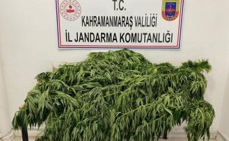 Kahramanmaraş'ta jandarma uyuşturucuya geçit vermiyor