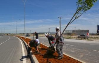 Büyükşehir'den Arterlere Yeşil Koridor