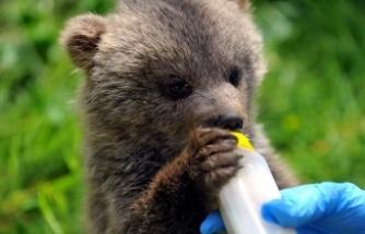 Kendisini yangından kurtaran beyefendiye, sarılarak teşekkür eden  yavru ayı